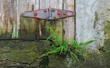 Hinge and Grass