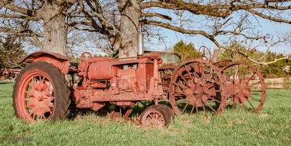 Two Old Tractors under a tree